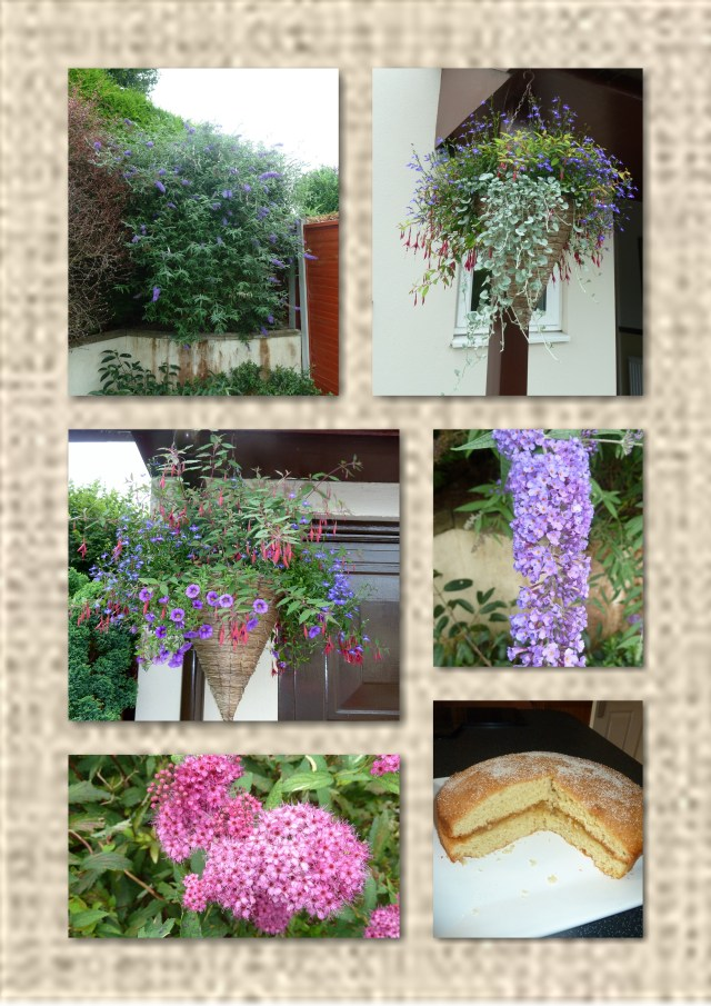 buddleia, flowers, hanging basket,