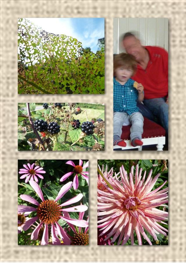 flowers, blackberries