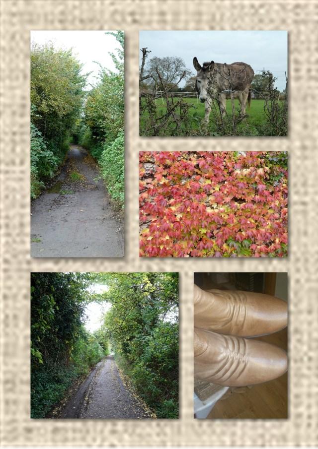 lanes, donkey, autumn