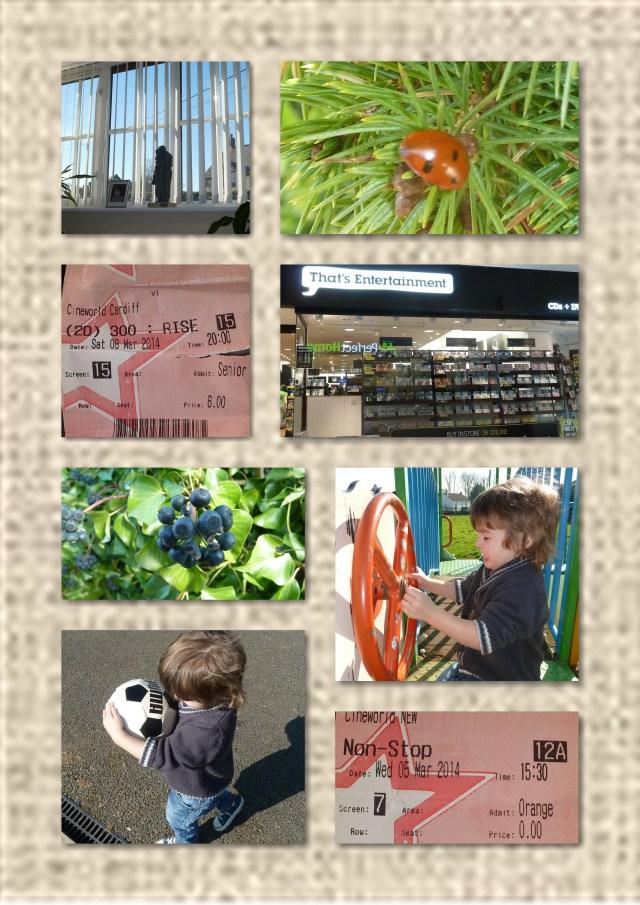 sunshine, ladybird, park, cardiff