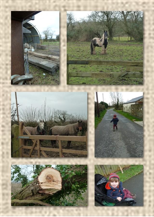 horses, walking, countryside