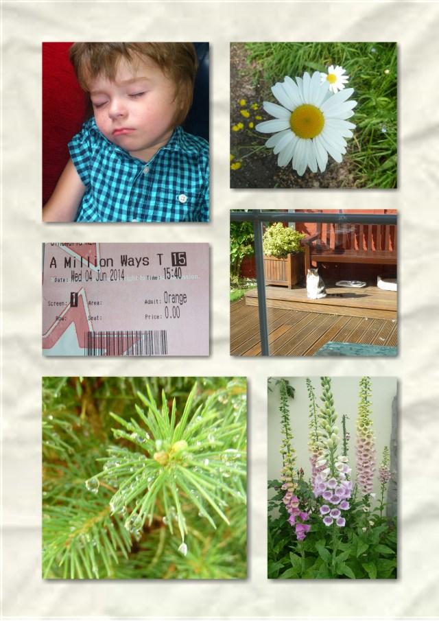 orange wednesday, gardens,