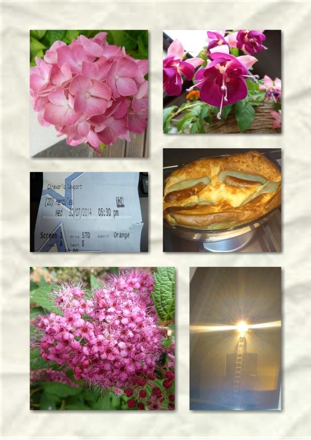 soosie wales, flowers, #365