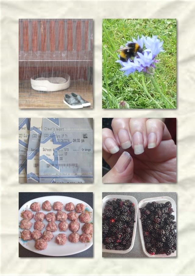 soosie wales, #365, rain, blackberries, orange wednesday