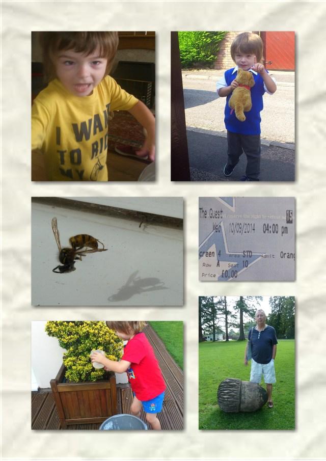 Soosie wales, wasps, orange wednesday, tredegar house, garden
