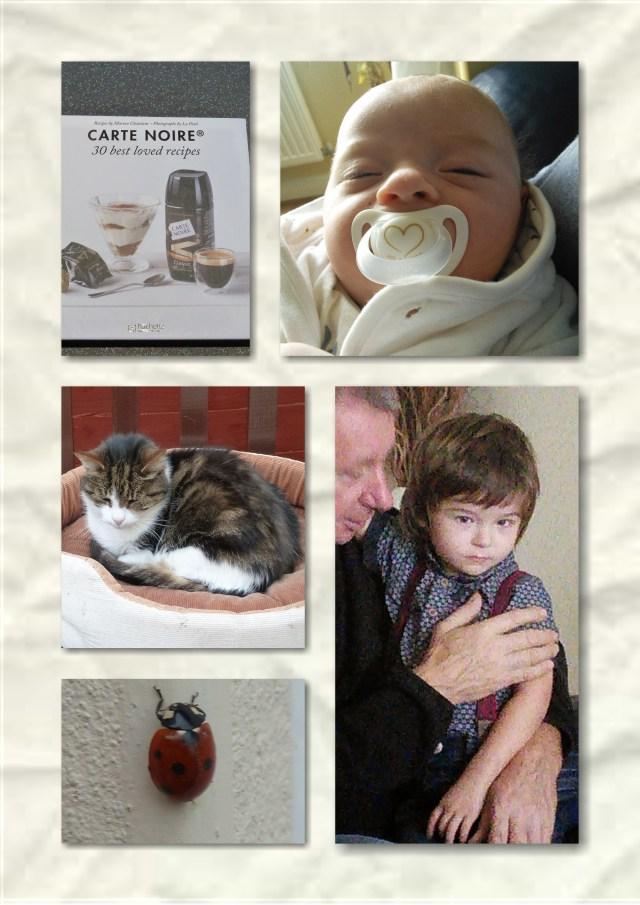 soosie wales, grandsons, cat, ladybird