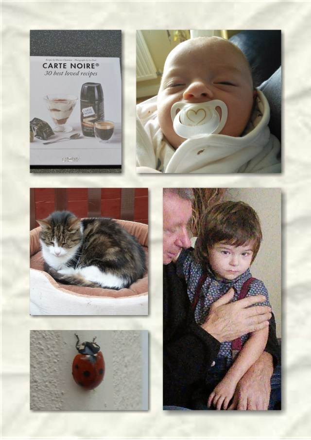 soosie wales, grandsons, cat, ladybird